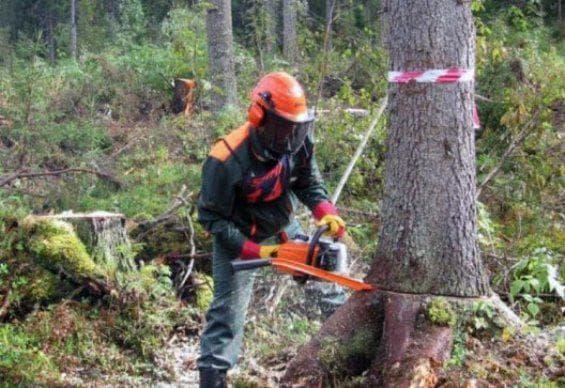 Работа бензопилой по дереву