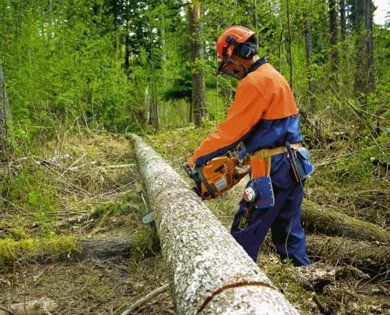 Работа бензопилой в лесу